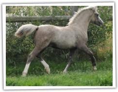 Galliano 2012 ještě v hřebčíně Taraco