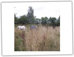 6/2008 - velcí koně v trávě:-)