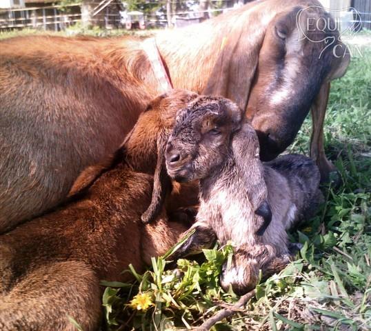 Malá Dorinka narození